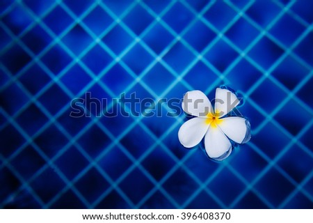 white flower in water on a background of blue swimming pool tiles