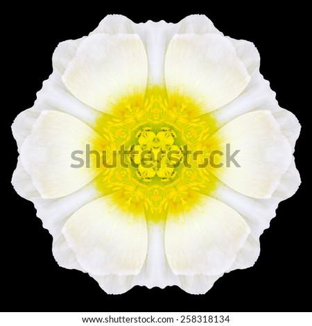 White Flower Mandala. Kaleidoscopic design Isolated on Black Background. Mirrored pattern - stock photo