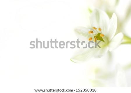White flower on a white background - stock photo