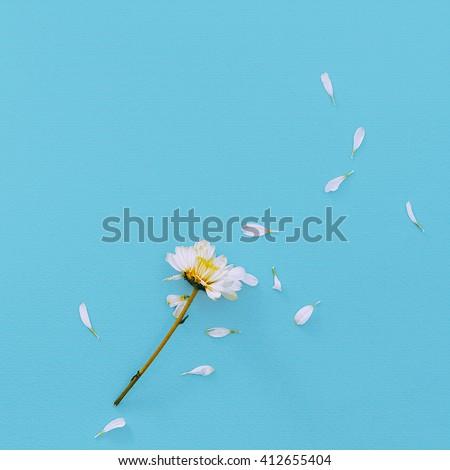 White Flower on blue background. Minimalism Fashion Details - stock photo