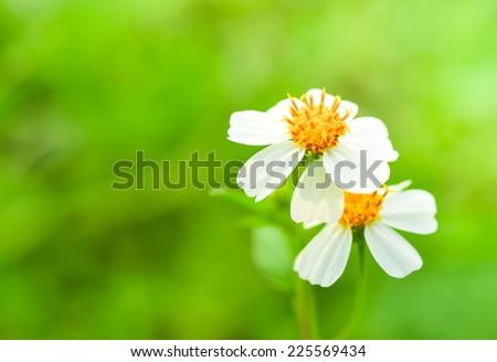 white flower on green background. - stock photo