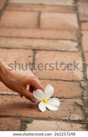 White flower on the pavement with hand