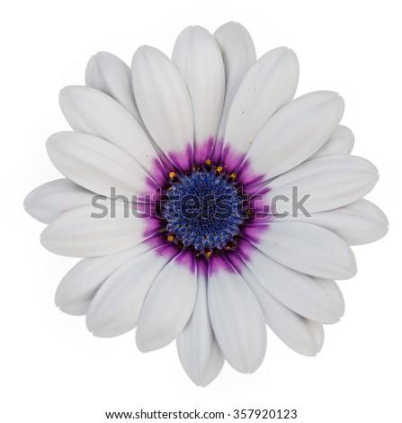 White flower on white background stock photo royalty free white flower on white background mightylinksfo