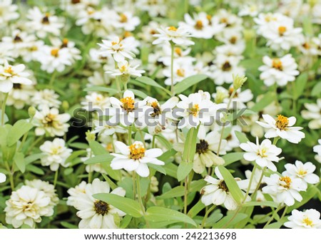 white flower plants blooming in nature background