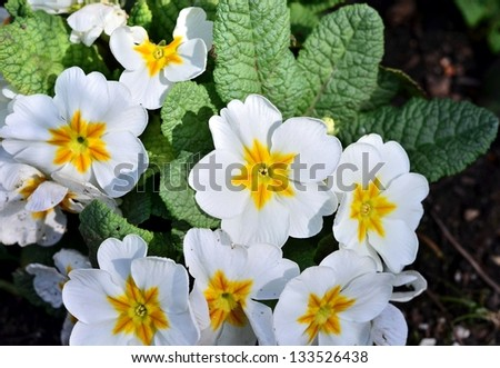 White flower portrait in the garden - stock photo