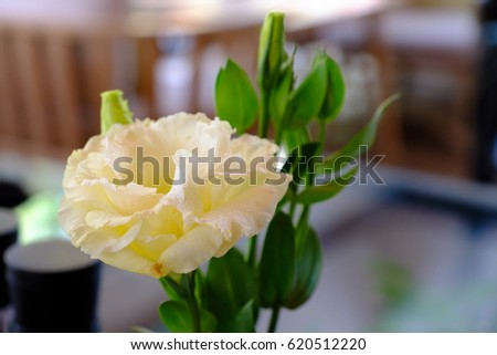 White flower green stem blurred background stock photo 620512220 white flower with green stem with blurred background at a cafe mightylinksfo