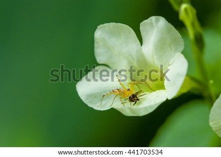 White flower with spider perched nicely . - stock photo