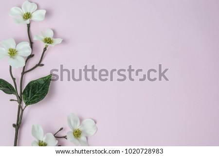 white flowers against pink background with room for text
