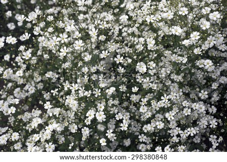 White Flowers all over in a flower bed - stock photo