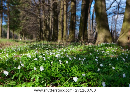 white flowers among green grass at the edge of the forest - stock photo
