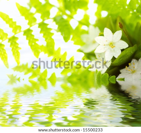 White Flowers and green leafs reflected in water (shallow dof) - stock photo