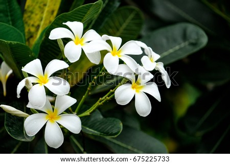 White flowers bloom on early in the morning after rain