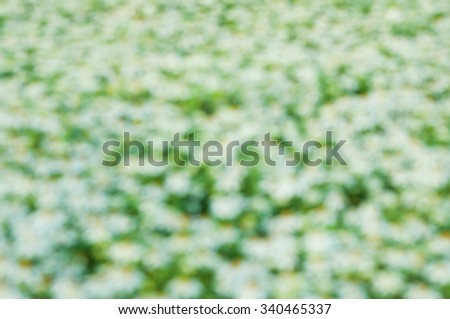 white flowers(blurry background)
