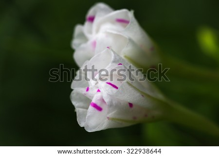 White flowers close up. White flowers with green background. - stock photo