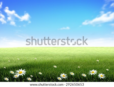 white flowers green grass hill, lawn, field, over blue sky white clouds background wallpaper template