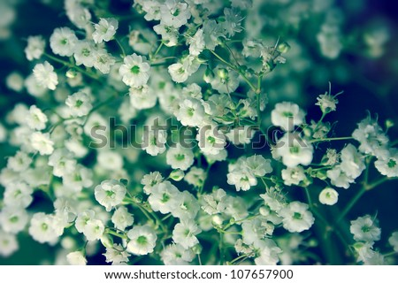 White flowers in the bouquet close-up - stock photo