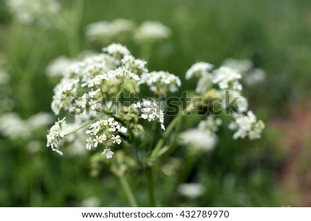 white flowers in the grass