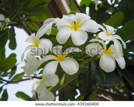 white flowers is beautiful, white flowers in the garden, white flowers background,,flowers background blur, flower in the garden, background green