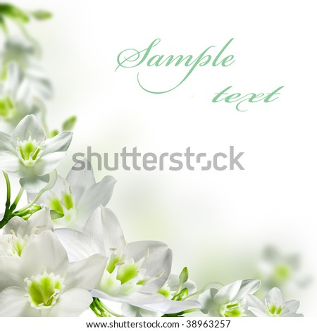 White flowers isolated over white - stock photo