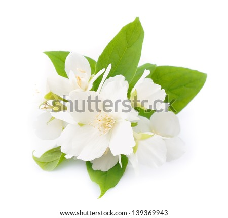 White flowers jasmine on white stock photo royalty free 139369943 white flowers of jasmine on the white mightylinksfo