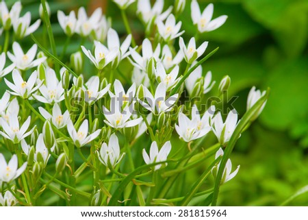 white flowers on a sunny day in the garden - stock photo