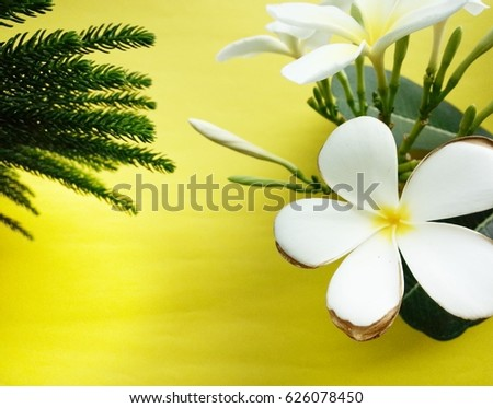 White flowers on a yellow background.