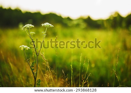 white flowers on bright green natural background - stock photo