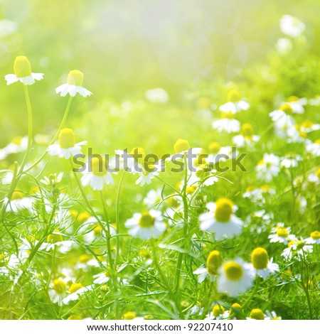 white flowers on green background - stock photo