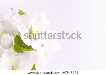 White flowers on textured paper