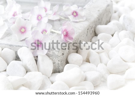 White flowers (Phlox) in water pond. Still life.  - stock photo