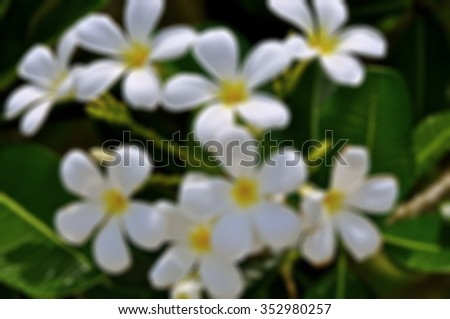 White flowers unfocused background