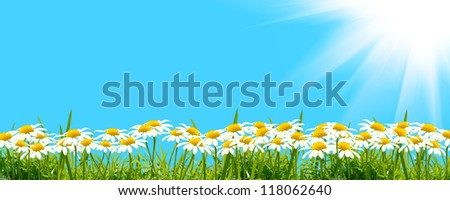 white flowers with grass - stock photo