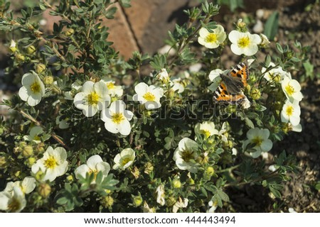 White flowerses with orange stamen grow on background green sheet