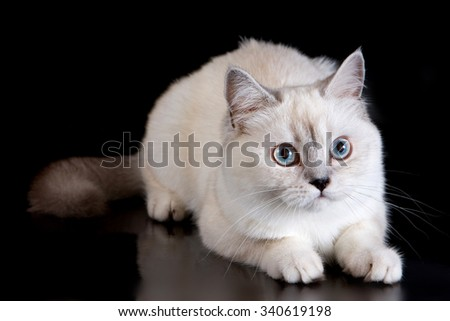 White fluffy cat on a black background - stock photo