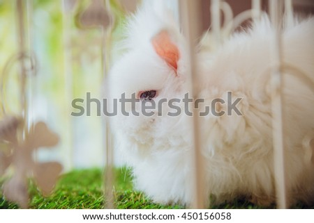 White fluffy rabbit sits in a cage on the grass - stock photo