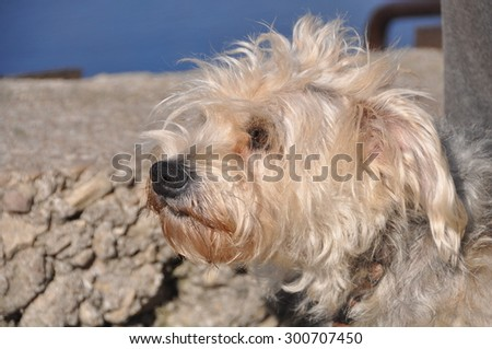 white fluffy small dog