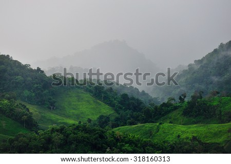 White fog on the mountain green at The-wada Peak (Phutoei National Park), Suphanburi (Thailand)
