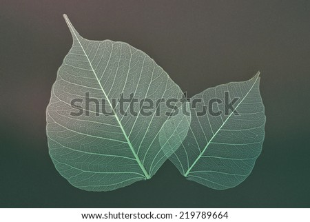 white foliage - stock photo