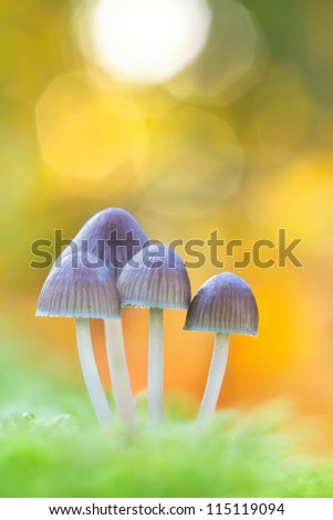 white forest mushroom in moss after and flares in the background - stock photo
