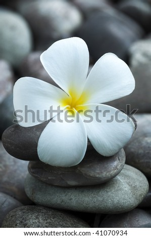 White frangipani and therapy stones.