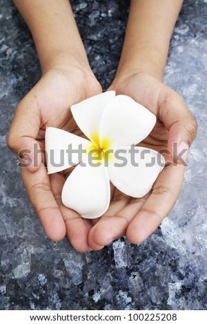 White frangipani flower with hand - stock photo