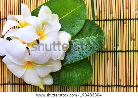 white frangipani flowers bouquet and green leaves with fresh water dew on bamboo mat textured background use for beautiful nature backgrond backdrop and relaxing theme  - stock photo