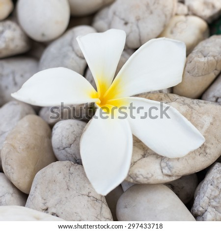 white frangipani on  pebbles stone. - stock photo
