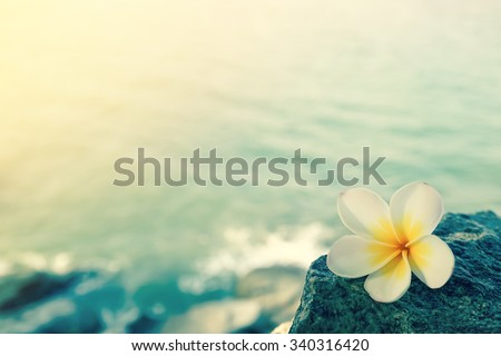 White frangipani on the rock at the beach - stock photo