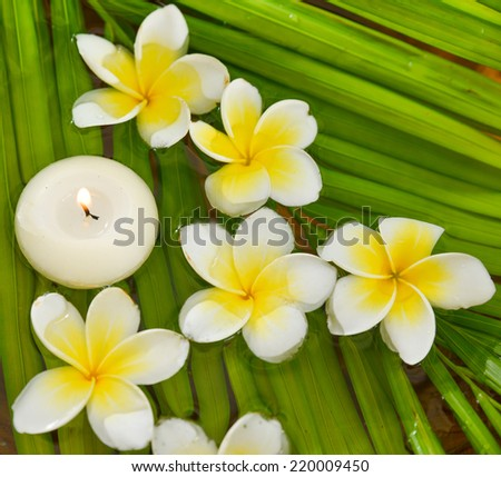 White frangipani with candle and wet palm leaf texture - stock photo