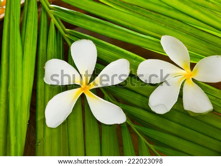 White frangipani with palm leaf in water - stock photo