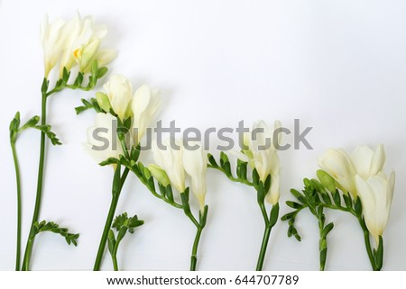 White freesia flower green buds stock photo download now 644707789 white freesia flower green buds mightylinksfo