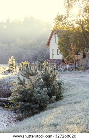 White frost covered pine branches, new pine, Latvia, The first rays of the morning sun and haze - stock photo