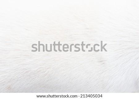 white fur close up - stock photo