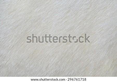 white fur texture background. white fur texture. white fur texture. white fur texture. white fur texture. white fur texture. white fur texture. white fur texture. white fur texture. white fur texture. - stock photo